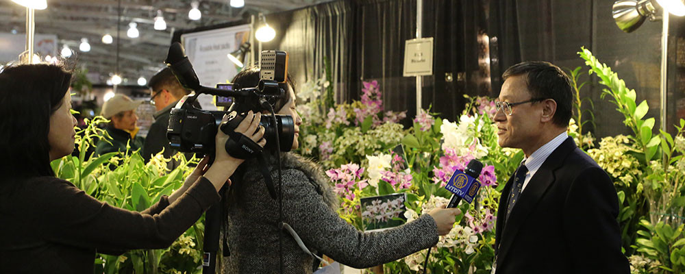 Behind the Scenes at the Orchid Show